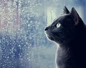 http://ecosounds.net/wp-content/uploads/2015/01/rain1.jpg