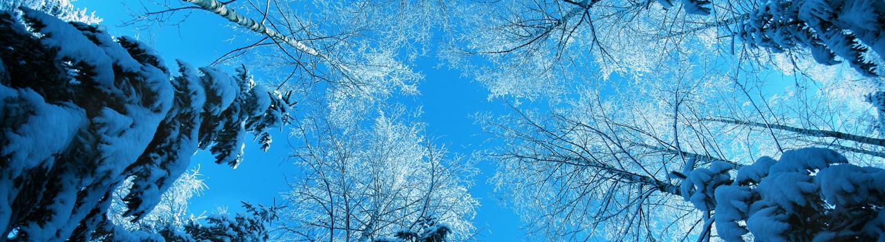 звуки зимнего леса для детей скачать бесплатно