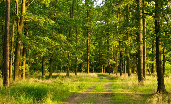 summer_forest_5
